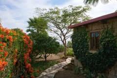 Casita-Garten
