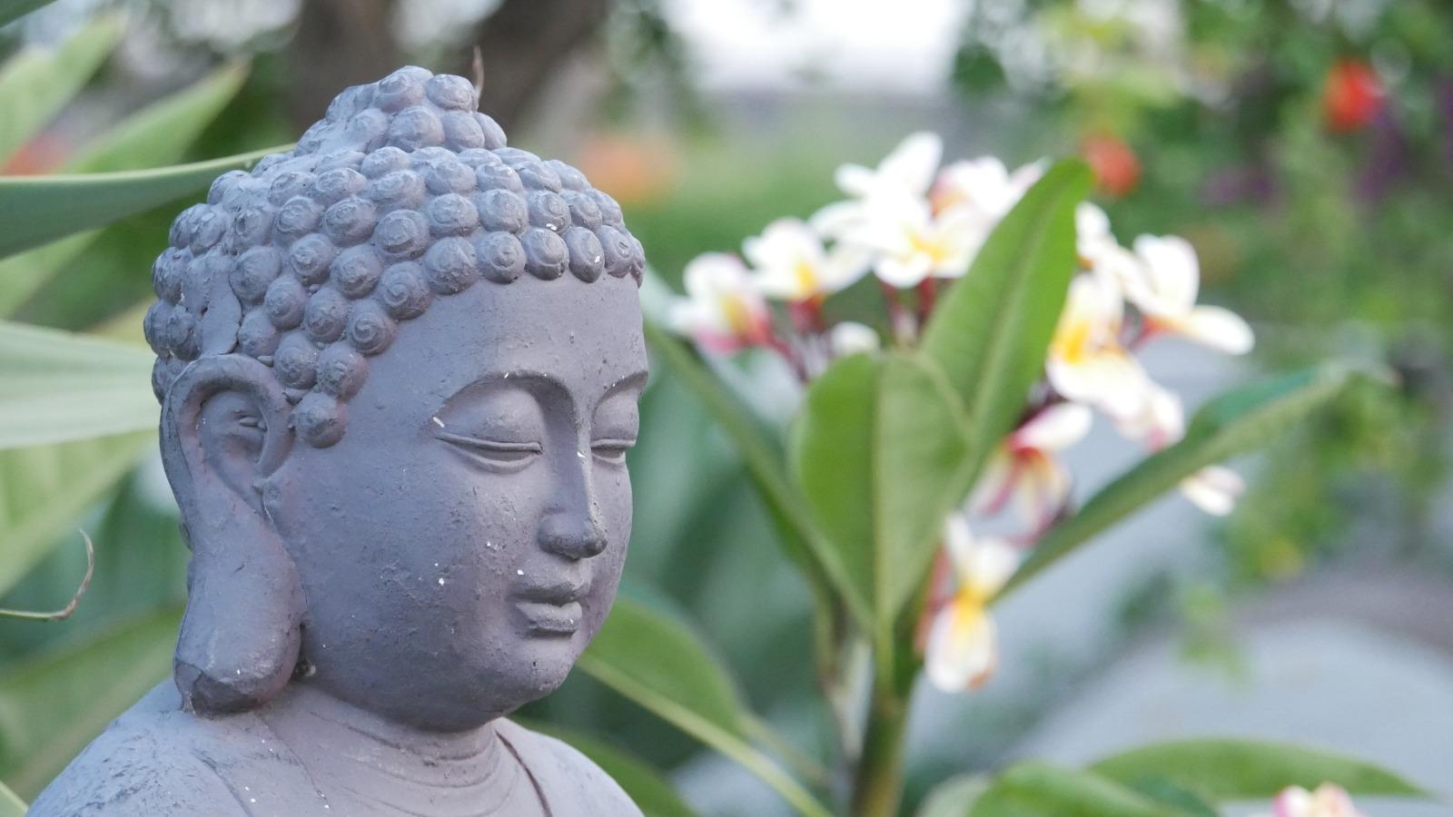 Buddha mit Frangipani